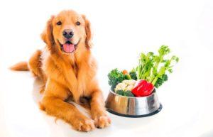 alimentazione animali