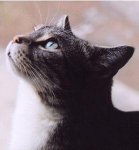 comunicazione gatto